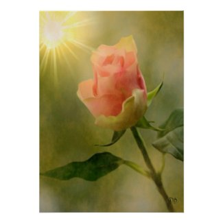 Single Pink Rose Posters