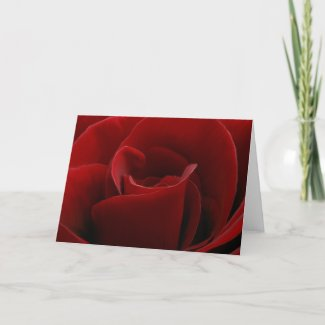 Single Red Rose Card card