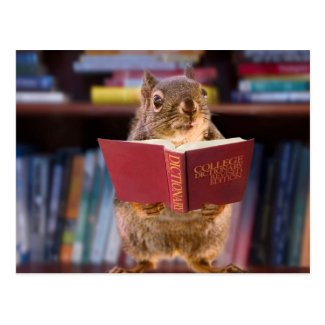 Smart Squirrel Reading a Dictionary