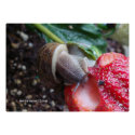 Snail Eats Strawberry Posters