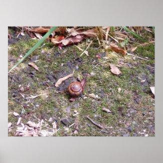 Snail Macro #1