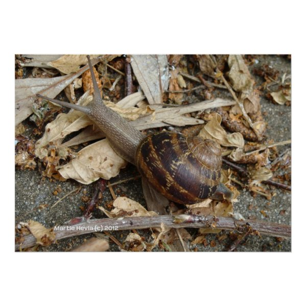 Snail on the Run Print