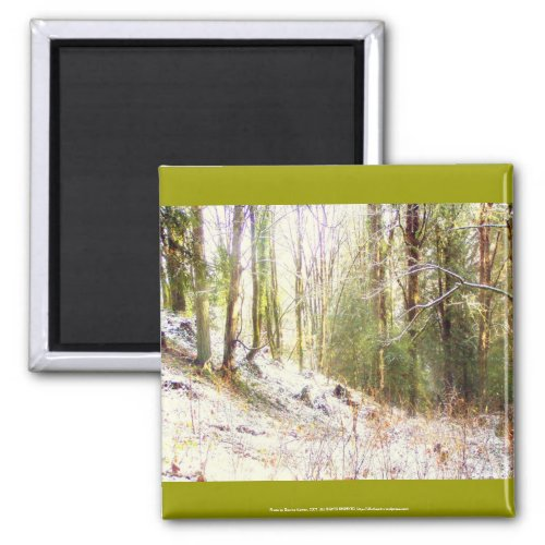 Snowy Sunlit Forest Glade #2 magnet
