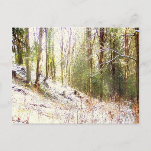 Snowy Sunlit Forest Glade #2 postcard