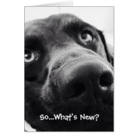 So What's New? Hello Greeting Card