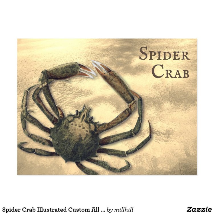 Spider Crab Illustrated Custom All Occasion Postcard