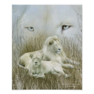 Spirit Of The White Lions Art Poster/Print
