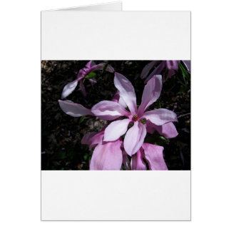 Spring Magnolia Pink Greeting Card