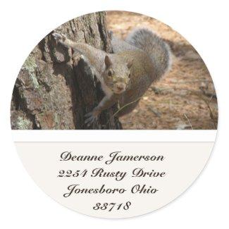 Squirrel Address Stickers sticker