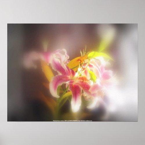 stargazer lilies #19 print