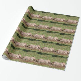 Sunbathing Capybara Gift Wrap Paper
