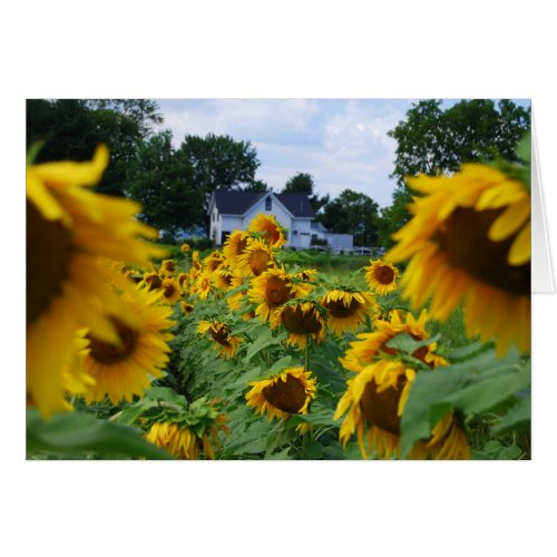 Sunflower Field with Farmhouse Card card