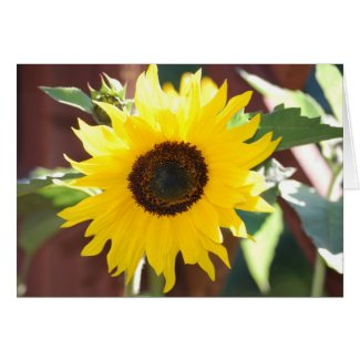 Sunflower in Full Bloom Greeting Card