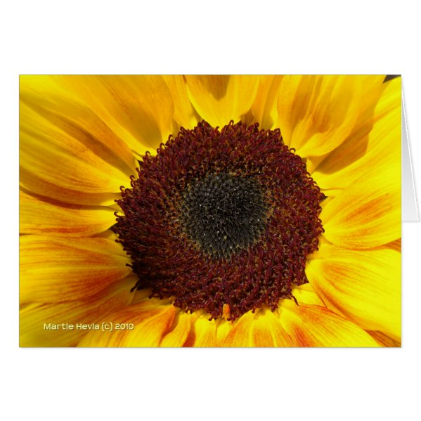 Sunflower Sun - Note Card