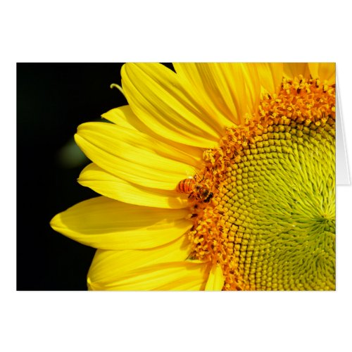 Sunflower With Honeybee Blank Card
