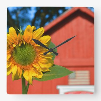 Sunflower With Red Barn Square Wallclocks