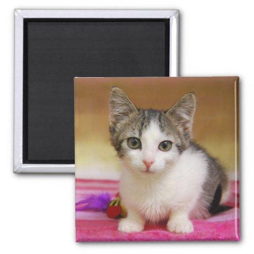 Sweet Kitten Magnet magnet