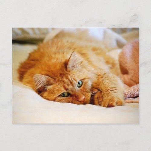 Sweet Orange Cat Postcard postcard