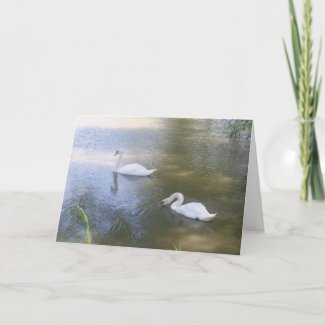 Swimming Swans Card card