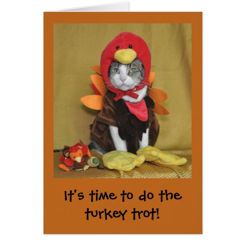 Tabby and white cat Thanksgiving card