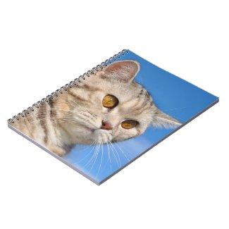 Tabby cat Notebook notebook