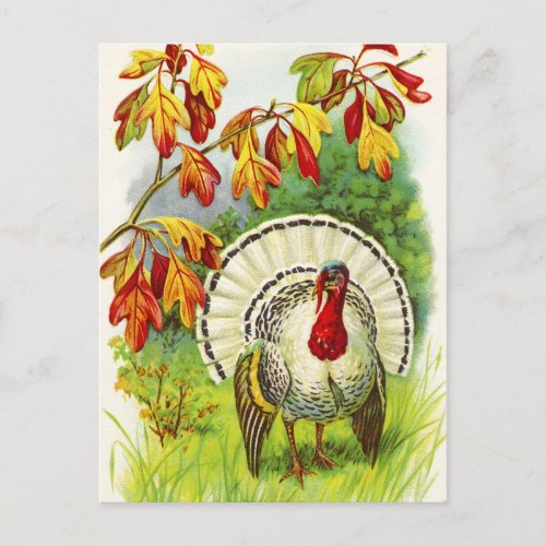 Thanksgiving Greetings Holiday Postcard