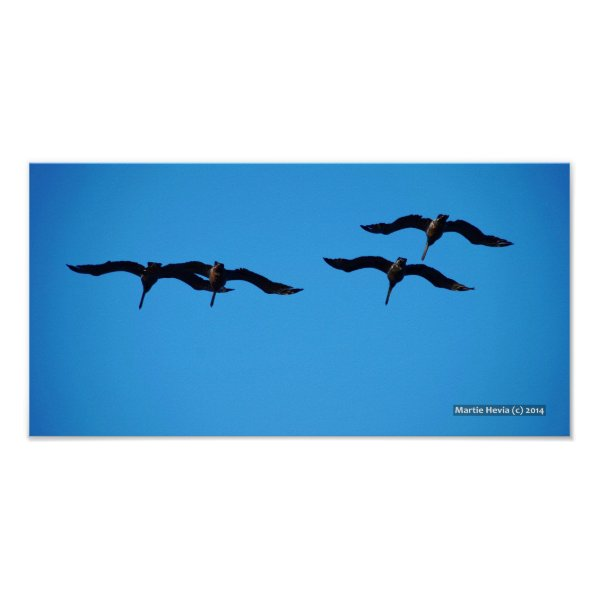 The Pelican Four Posters