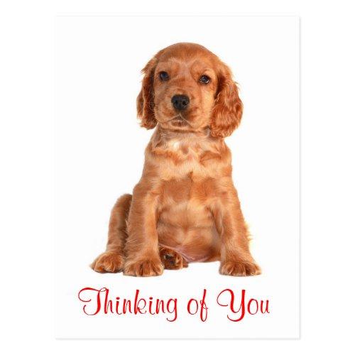 Thinking of You Cocker Spaniel Puppy Dog Postcard