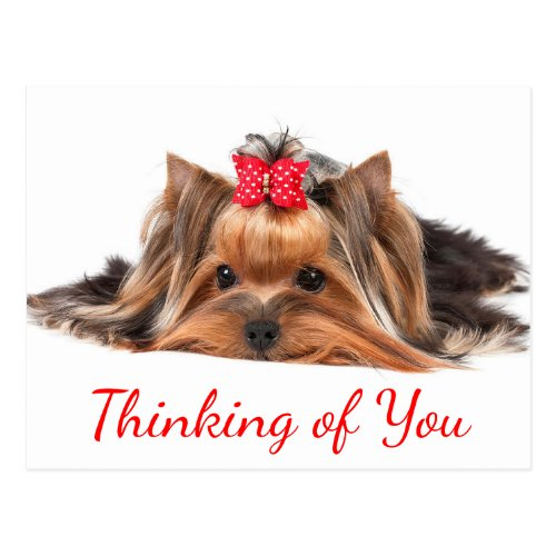 Thinking Of You Yorkshire Terrier Puppy Dog Hello Postcard