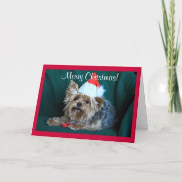 Tiny Yorkie in Santa Hat Holiday Card
