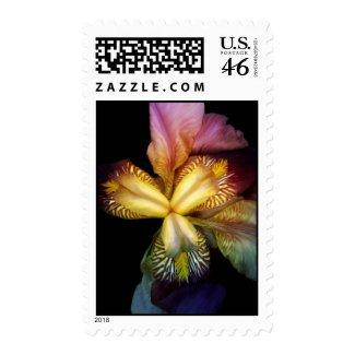 Toms Irises Postage stamp