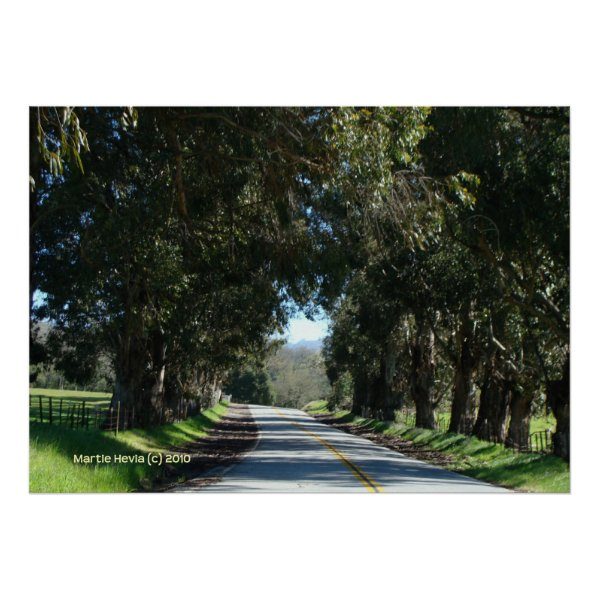 Tree-Lined Country Road Posters