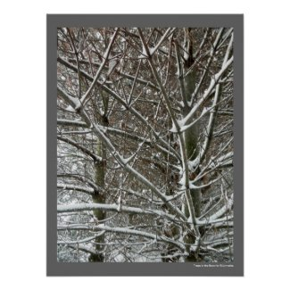 Trees in the Snow Winter Photo Posters