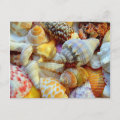 Tropical Seashells Photography Postcards postcard
