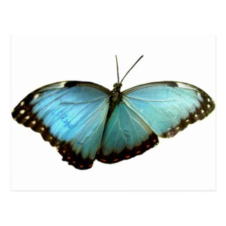 Turquoise Butterfly Post Cards