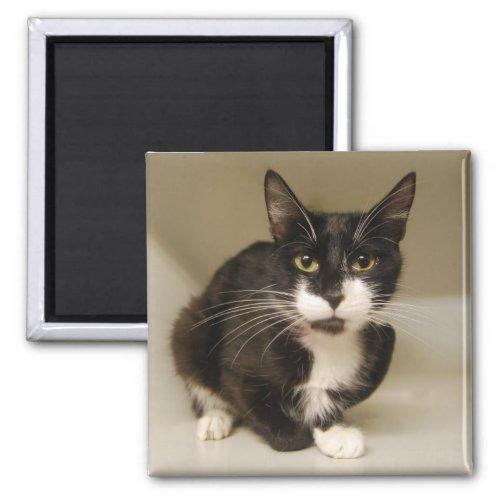 Tuxedo Cat Magnet magnet