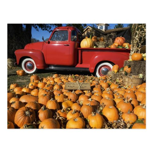 USA, New York, Peconic, pumpkin farm with pickup Postcard