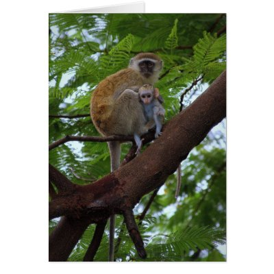 Vervet Monkey Mother and Child Card