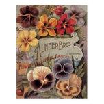 ❤️ Vintage Assorted Pansies Seed Packet Postcard