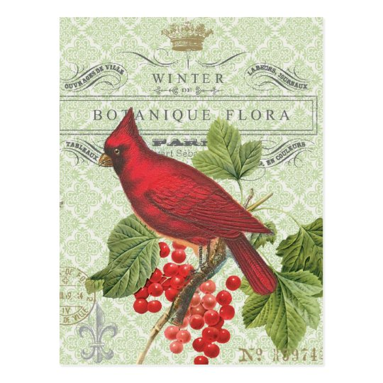 Vintage Holiday Winter Red Cardinal Postcard Postcard