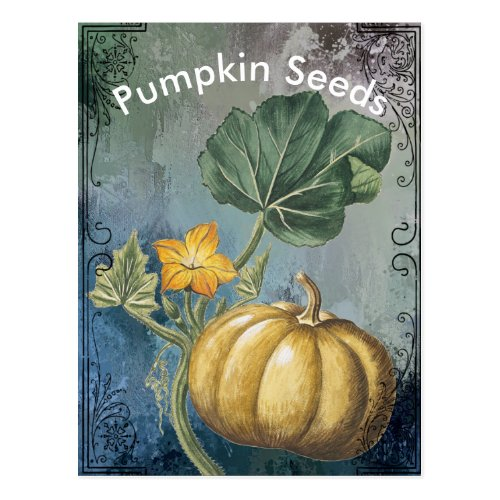 Vintage Pumpkin on Vine Postcard