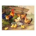 Vintage Rooster, Hens & Chicks Postcard