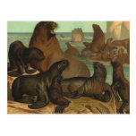Vintage Sea Lions on the Beach, Marine Life Animal Postcard
