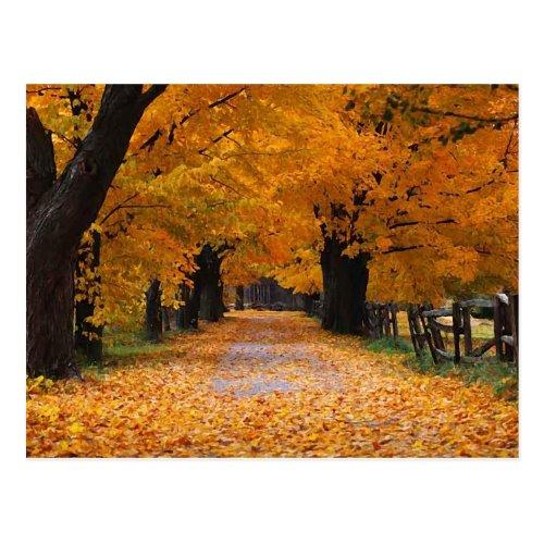 Walking Down Autumn's Memory Lane Postcard