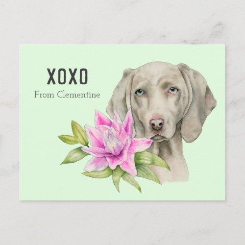 Weimaraner Dog XOXO   Valentine's Holiday Postcard
