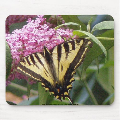 Western Tiger Swallowtail butterfly on pink lilacs mousepad