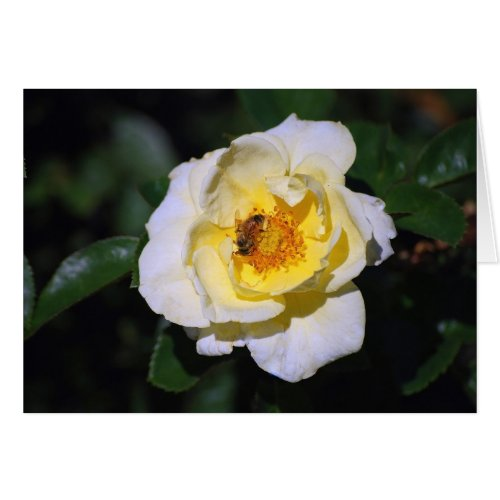 White and Yellow Rose With Honeybee Card card
