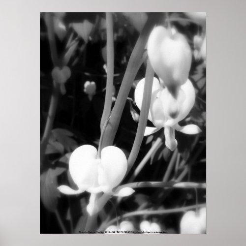 white bleeding heart macro, black and white print