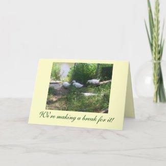 White Ducks on a Ramp Birthday Card card