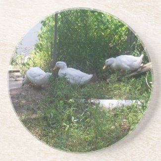 White Ducks on a Ramp Coaster coaster